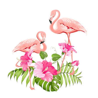 Fleur tropicale et flamants roses sur fond blanc. illustration vectorielle.