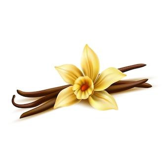 Fleur de vanille réaliste avec des bâtons secs