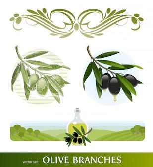 Fleurit les rameaux d'olivier. rameau d'olivier dessiné à la main.