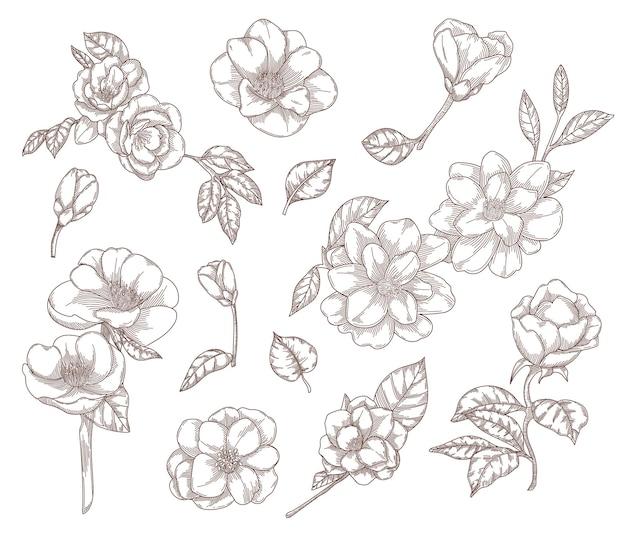 Fleurs de camélia illustrations de croquis dessinés à la main.