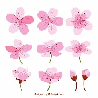 Fleurs de cerisier avec des conceptions différentes