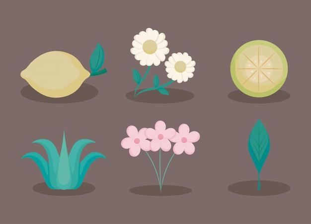 Fleurs et citrons s