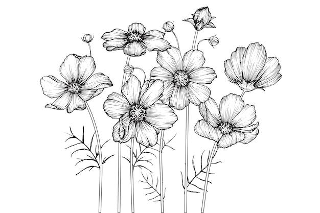 Fleurs cosmos et dessins de feuilles