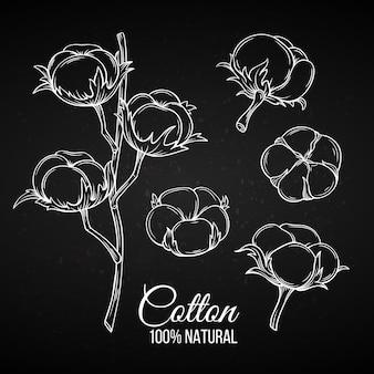 Fleurs de coton décoratives dessinées à la main