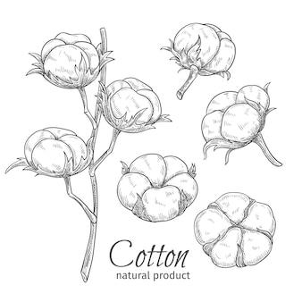 Fleurs de coton dessinées à la main.