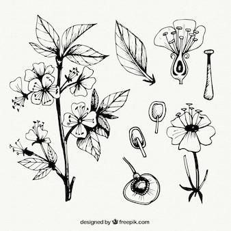 Fleurs croquis et feuilles