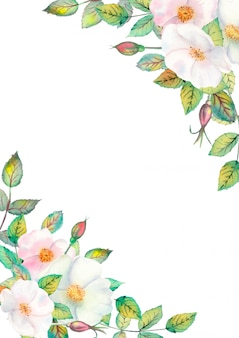 Fleurs de cynorhodon