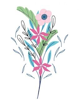 Fleurs feuillage plantes herbe sauvage botanique