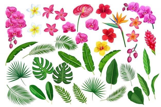 Fleurs et feuilles tropicales