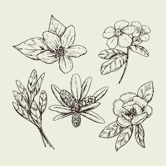 Fleurs et herbes dessinées à la main