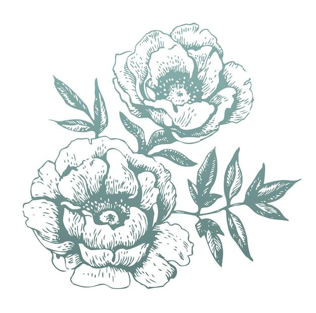 Fleurs. illustrations dessinées à la main