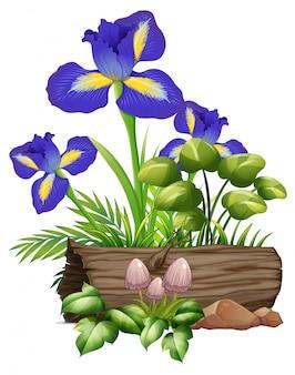 Fleurs d'iris et champignons sur blanc