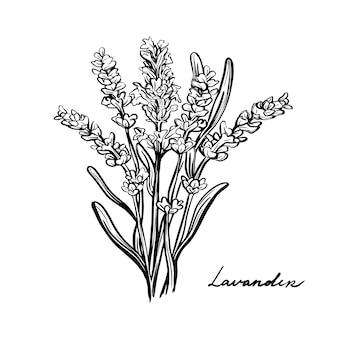 Fleurs de lavande, herbes de provence