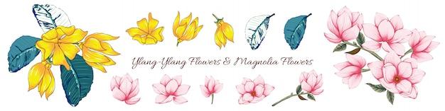 Fleurs de magnolia pastel rose et d'ylang jaune.