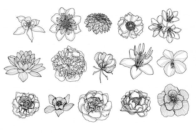 Fleurs à la main dessin et croquis noir et blanc