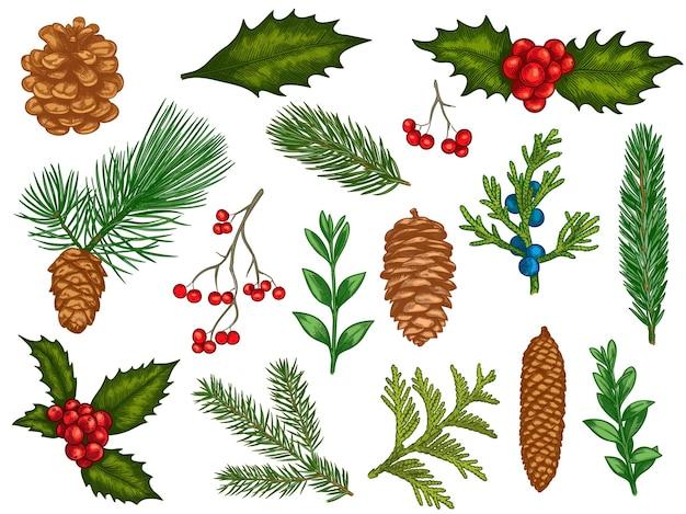 Fleurs de noël. décorations d'hiver de noël en fleurs, poinsettia rouge, gui, feuilles de houx avec baies, branches de sapin, ensemble de vecteurs de pommes de pin. plantes d'hiver colorées gravées, éléments pour cartes