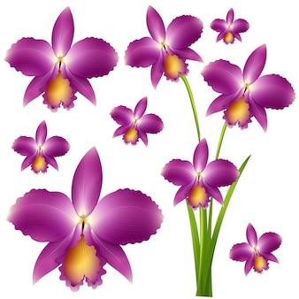 Fleurs d'orchidées violettes sans soudure