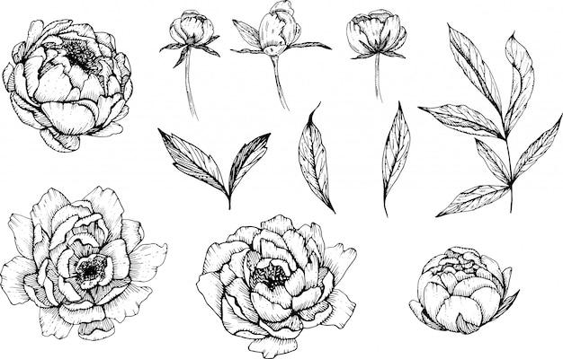 Fleurs de pivoine dessinés à la main, bricolage doodle flowers