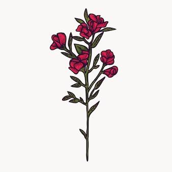 Fleurs de pois sucré rouge dessinés à la main isolé coloré et contour des cliparts.