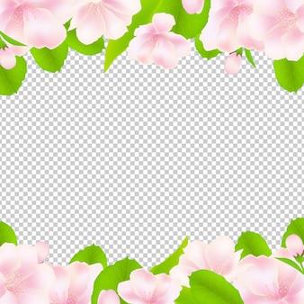 Fleurs de pommier avec cadre