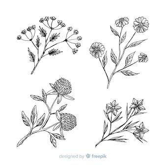 Fleurs réalistes dessinées à la main avec des tiges et des feuilles