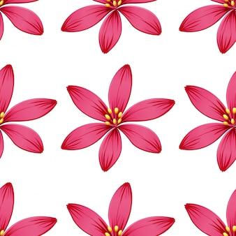 Fleurs sans couture isolés sur blanc