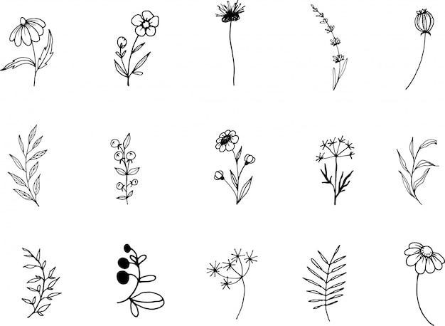 Fleurs sauvages, dessin au trait doodle clipart, dessinés à la main
