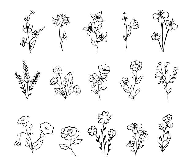Fleurs sauvages et fleurs définies dans le style de contour