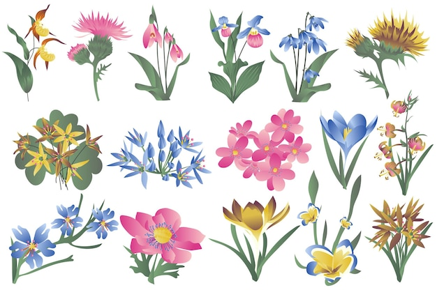 Fleurs sauvages en fleurs et fleurs en fleurs isolées ensemble iris lis perce-neige et autres types