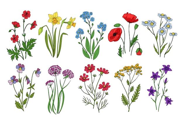 Fleurs sauvages. plantes de prairie moine chardon pavot. collection botanique de fleurs sauvages sur fond blanc