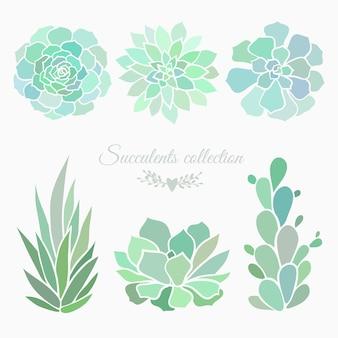 Fleurs succulentes isolées sur illustration vectorielle blanc avec des plantes succulentes
