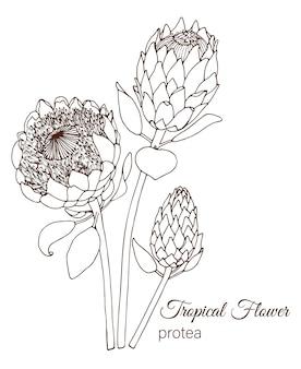 Fleurs tropicales dessinées à la main