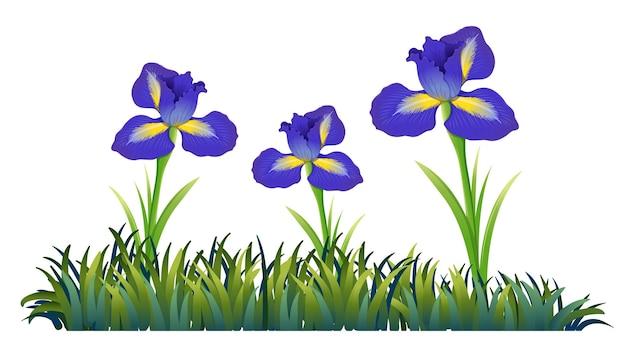 Fleurs violettes dans le domaine