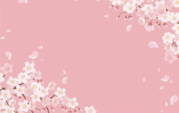 Floral avec des fleurs de cerisier en pleine floraison sur un rose.