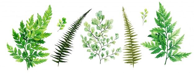 Flore sauvage, fougères et adiantum, collection de verdure lumineuse aquarelle