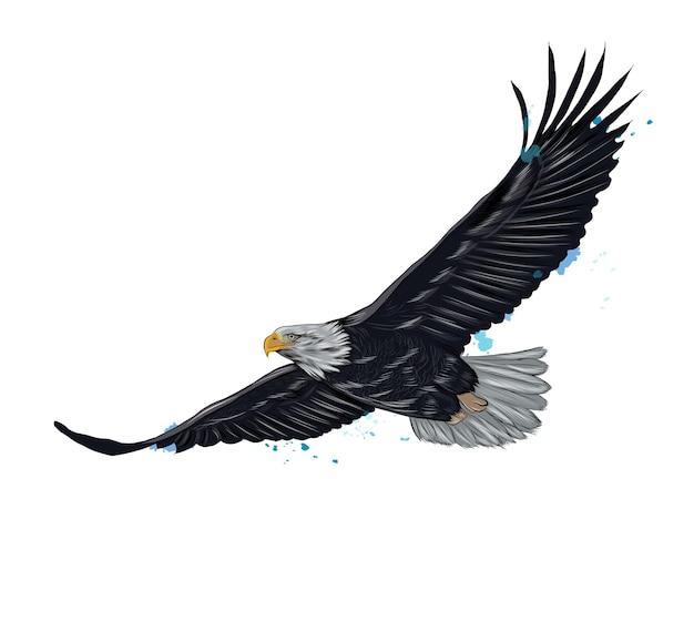 Flying pygargue à tête blanche d'une éclaboussure d'aquarelle, dessin coloré, réaliste.