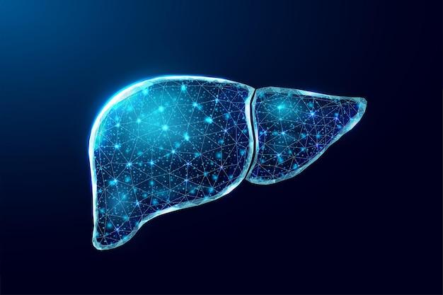 Foie humain. style filaire low poly. concept médical, traitement de l'hépatite. illustration vectorielle 3d moderne abstraite sur fond bleu foncé.