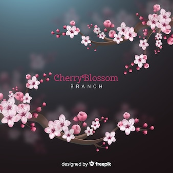 Fond d'arbre de fleurs de cerisier