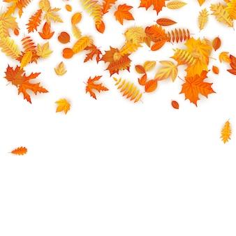 Fond d'automne avec des feuilles d'érable doré, de chêne et autres.