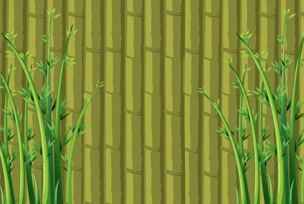 Fond de bambou