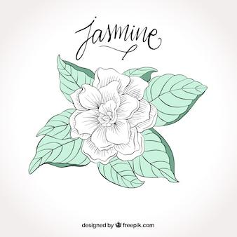 Fond d'une belle fleur blanche à la main