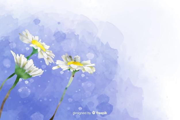 Fond de belle marguerite aquarelle