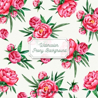 Fond de belles fleurs de pivoine aquarelle