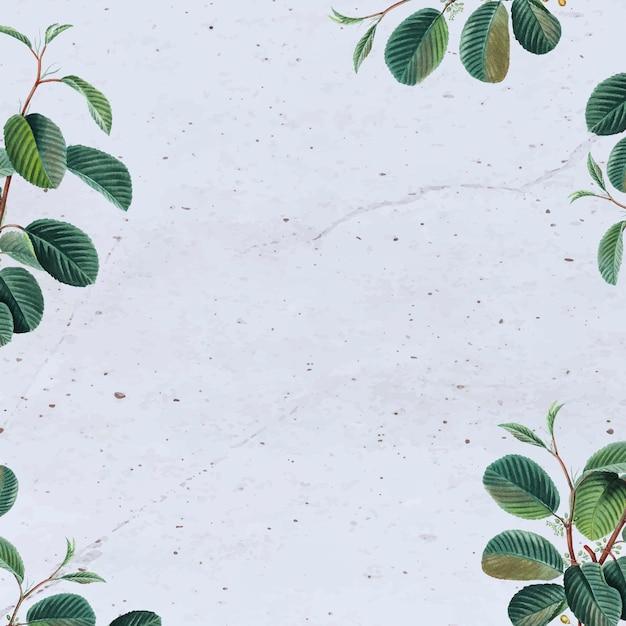 Fond de béton avec des feuilles