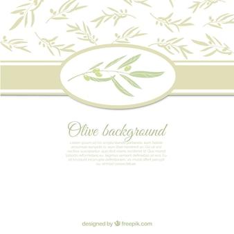 Fond blanc avec feuilles d'olivier