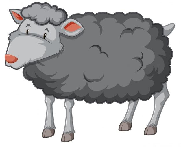 Fond blanc mouton noir