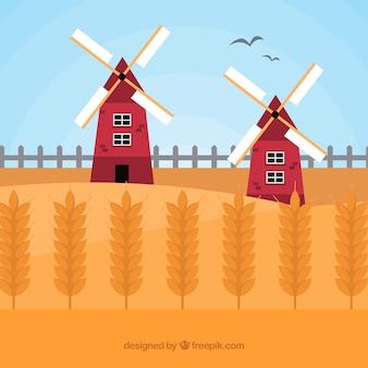 Fond de blé plat avec champ