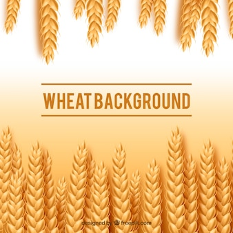 Fond de blé réaliste