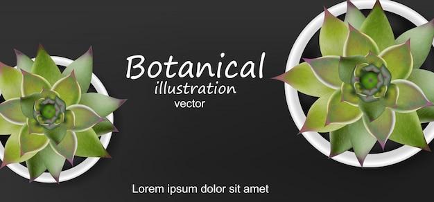 Fond botanique de plantes succulentes