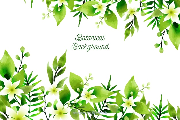 Fond botanique